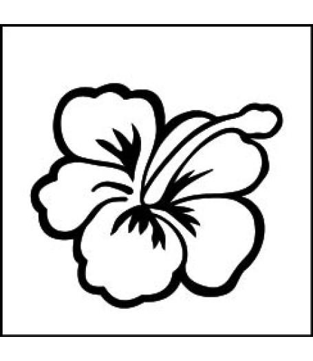Hibiscus --2